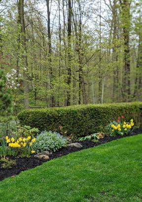 Beautiful local garden
